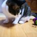 猫の早食い防止にパズルフィーダーを使ってみた